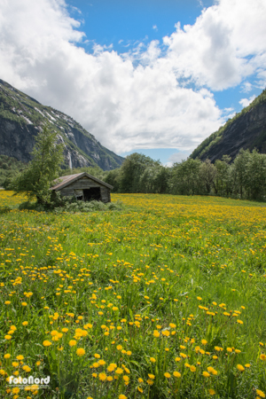 green summer field in Fjordland, Norway