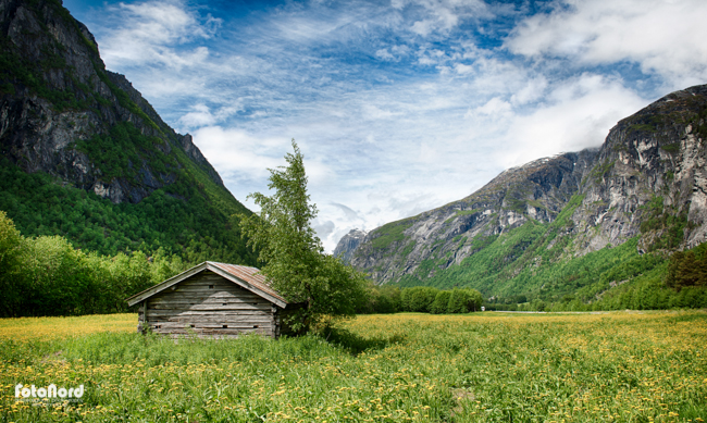 a green summer field in Fjordland, Norway
